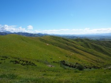 Whiter Hills