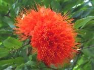 Flecker Botanic Garden