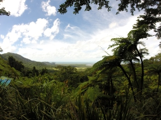 Daintree Forest