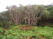 Fraser Island - Eli Creek
