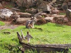 Zoo d'Adélaïde 6