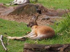 Zoo d'Adélaïde 7