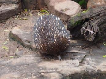 Zoo d'Adélaïde 10