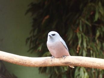 Zoo d'Adélaïde 11