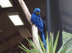 Zoo d'Adélaïde 13