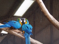 Zoo d'Adélaïde 14