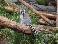 Zoo d'Adélaïde 16