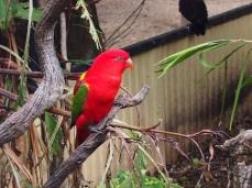 Zoo d'Adélaïde 17