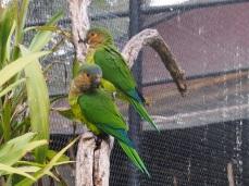 Zoo d'Adélaïde 18