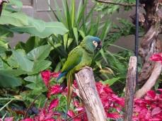 Zoo d'Adélaïde 19