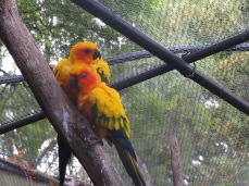 Zoo d'Adélaïde 20