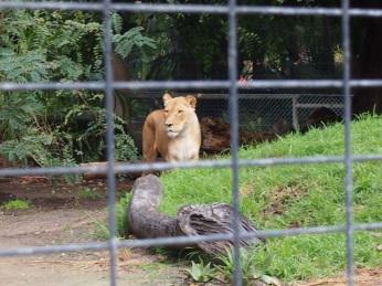 Zoo d'Adélaïde 21