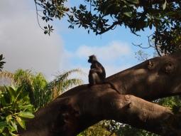 Zoo d'Adélaïde 26
