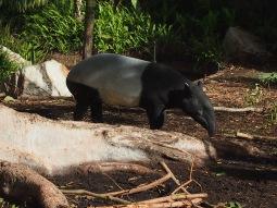 Zoo d'Adélaïde 27