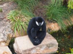 Zoo d'Adélaïde 28