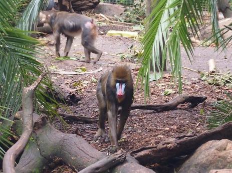 Zoo d'Adélaïde 29