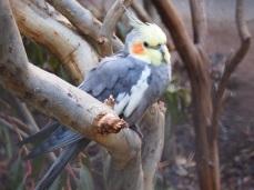 Zoo d'Adélaïde 31