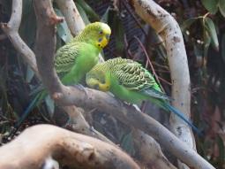 Zoo d'Adélaïde 32