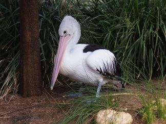 Zoo d'Adélaïde 33