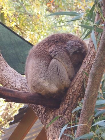 Zoo d'Adélaïde 34