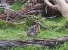 Zoo d'Adélaïde 36