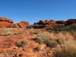 Kings Canyon 18