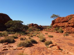 Kings Canyon 19
