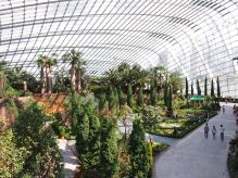 Singapour - Gardens By The Bay : Flower Dome