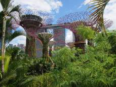 Singapour - Gardens By The Bay : Supertrees Groves